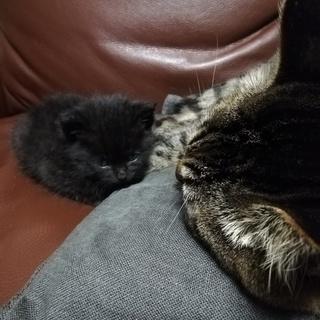生後1か月くらいの黒猫ちゃんです。