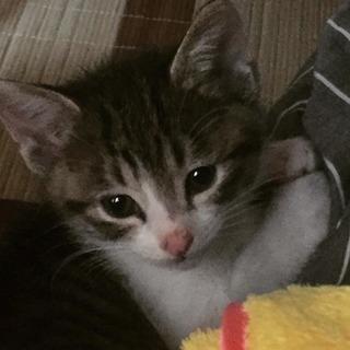 可愛い子猫(メス)