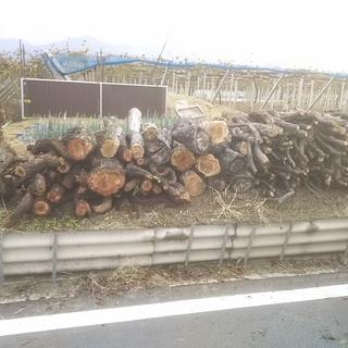 薪(ぶどうの木)