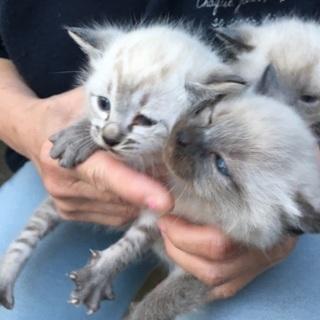 保護猫 3匹のうち、2匹の里親さんを探しております。 - 猫
