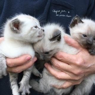 保護猫 3匹のうち、2匹の里親さんを探しております。