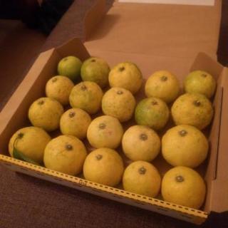 収穫した日にお渡し! 新鮮 柚子 無農薬 20個以上 約0.7キロ