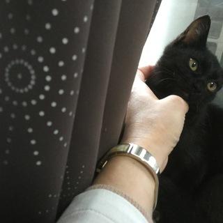 黒猫の里親さん募集しています!
