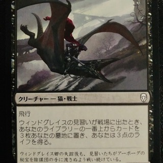 MTG シングルカード 「ウィンドグレイスの見習い」 日本語 D...