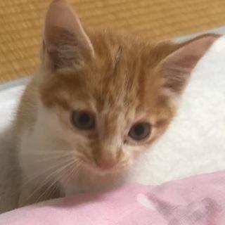 可愛い子猫ちゃんと一緒に