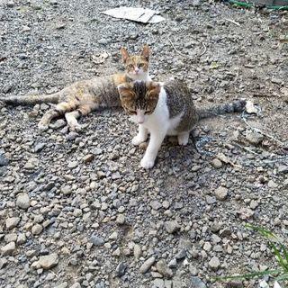 野良の子猫2匹の家族に
