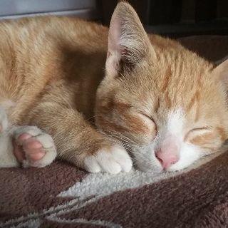 生後3ヵ月の子猫里親募集です。