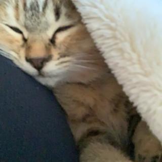 里親募集 子猫 推定3ヶ月 オス