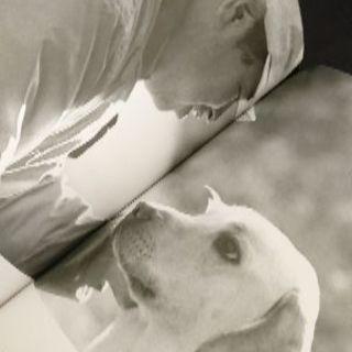 📚・盲導犬クイールを育てた訓練士 📚 🐕ハーネスを付け尻尾を振り...