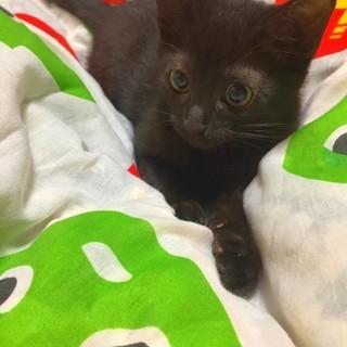 ■生後約5・6ヶ月の黒子猫(オス)の里親様募集