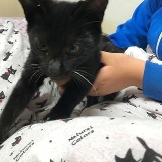 オス3ヵ月くらいの黒猫です