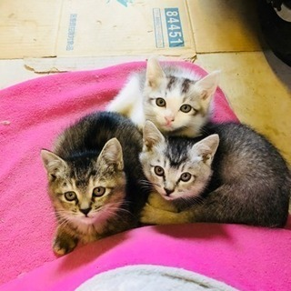 生後2ヶ月の子猫の里親募集してます!