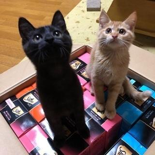 黒猫兄弟と茶トラ君のイケメントリオ。