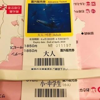 美ら海水族館  券