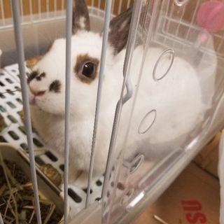 ミニウサギ2匹