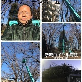 高木剪定 伐採店 ツチヤガーデンホーム【所沢市 入間市川越市志木...