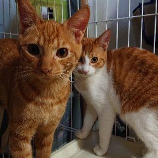 6ヶ月の保護猫4匹の里親募集です