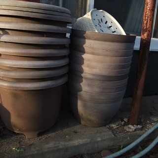 直径30cm以上のプラスチック植木鉢差し上げます