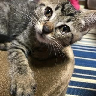 猫メス二匹(届出済み飼い主不在を確認済み)