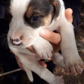 産まれたばかりの雑種犬1匹