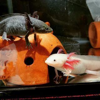 小動物や爬虫類やアクアリウム好きな方