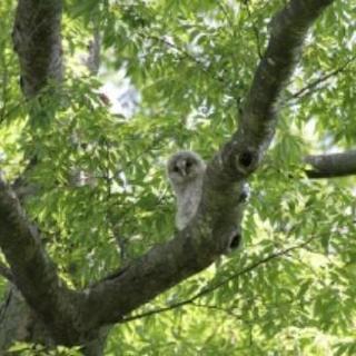 枝木、竹林の伐採承ります!