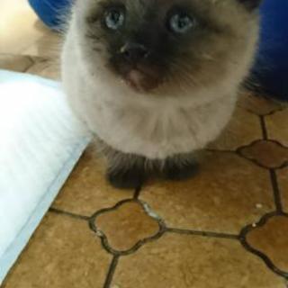 生後1ヶ月~ぐらいの元野良子猫ちゃん