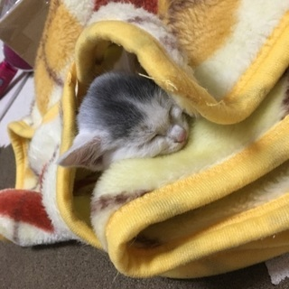 生後推定1カ月の子猫