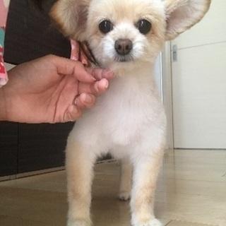 MIX 小型犬
