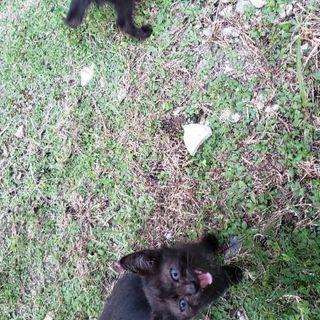 子猫2匹 里親募集