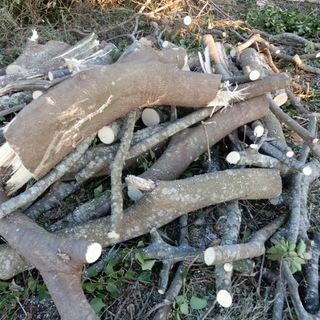 薪ストーブ等利用のための伐採木持っていってください。11月22日...