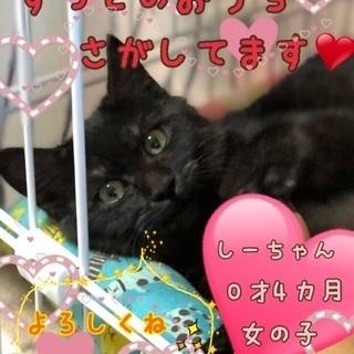 2ヶ月未満の黒猫の女の子です