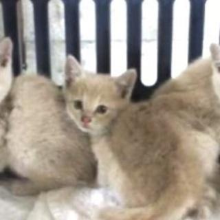里親決定!有難うございました!ぴったり寄り添う子猫3兄妹が保健所...