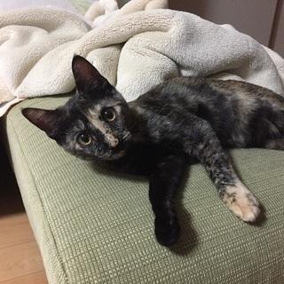 7ヶ月メス猫の家族募集