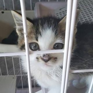 里親決定!有難うございました!保健所収容❗️小さな可愛い子猫♂♀助...