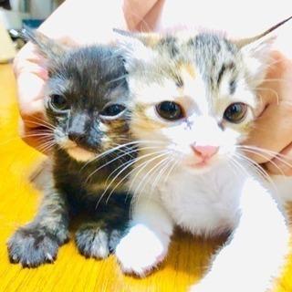 9月27日生まれの子猫2匹(一旦締め切り)