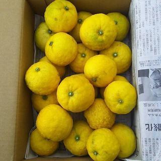 柚子5.0kg 100個位 無農薬 ゆず