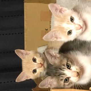 3匹の子猫の里親募集です