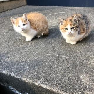 【里親さん決まりました】2匹の♂♀子猫