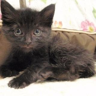 黒猫メス 生後2か月