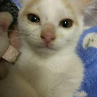 約3ヶ月の子猫