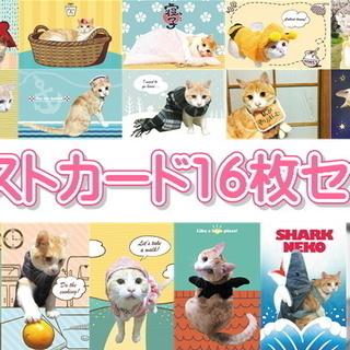 ちゃしろ猫ミャアーのオリジナルポストカード(写真+イラストデザイ...
