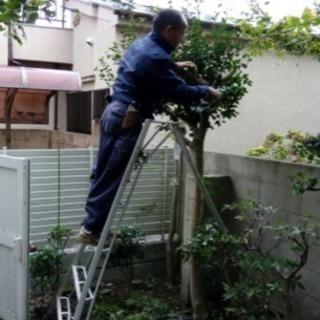 アパートマンション植栽管理お任せを【所沢市 さいたま市入間市〜】...