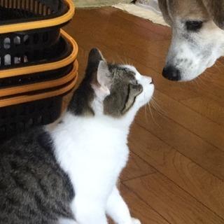 「犬と共存OK!」目は塞がり頭はカラスに襲われ血だらけの子猫を保...