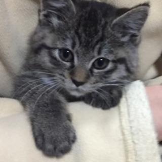 生後1か月くらいの子猫ちゃん🎵