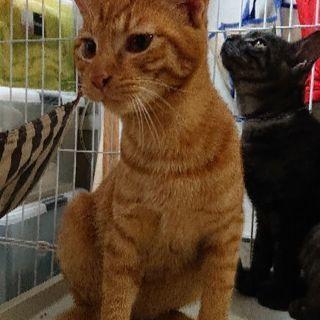 6ヶ月の保護猫4匹の里親募集