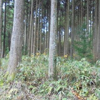 山林売ります。7,592㎡ 約2,296坪