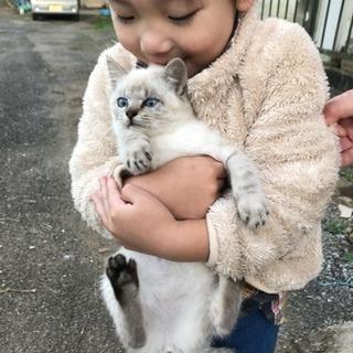 子猫☆里親さん募集