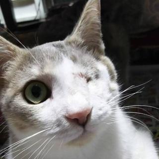 甘えんぼの猫ちゃんです❤️