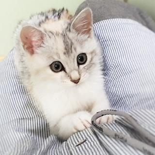 フワフワ子猫(メス)の里親になって下さい。
